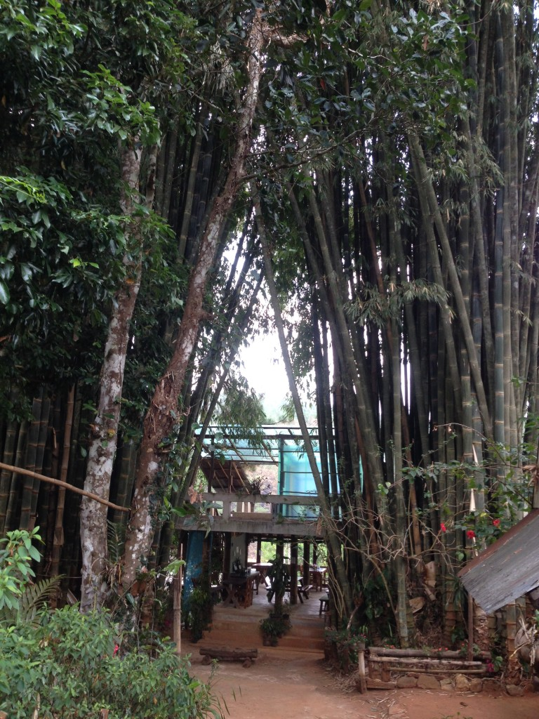 Mr Pa La's homestay in Pang Oung: the deck with view on the coffee plantation neatly squized in between two huge bamboo bushes!