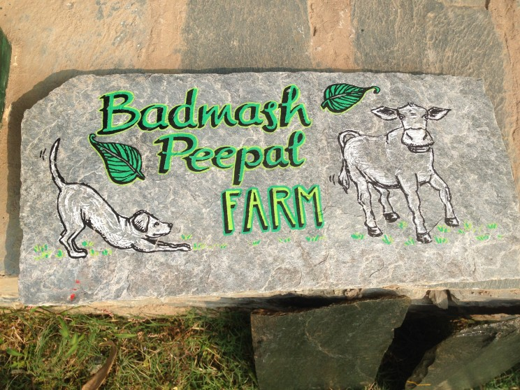 signpainting handlettering lilian leahy rotterdam badmash peepal farm india
